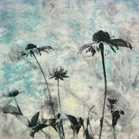 Flowers and plants black and white photography encaustic texture pollinators