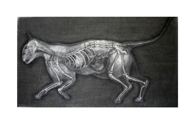 Roentgen's Cat