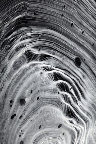 Abstract photograph of a tree inside by Harrison Taylor