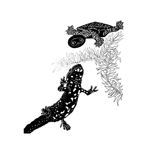 """Fired bellied newt and tortoise friends"" - It's been ages since I've seen you series by Dani Green"
