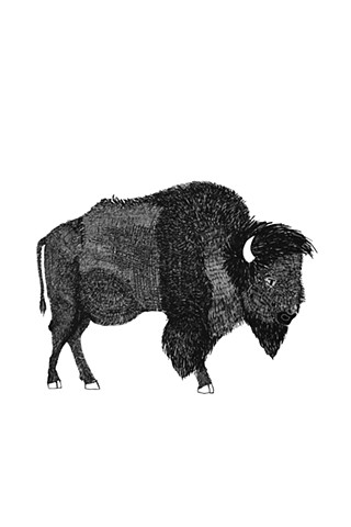 The Hunting Party Series, Bison. Illustration by Dani Green