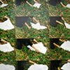 Forest Folding, III