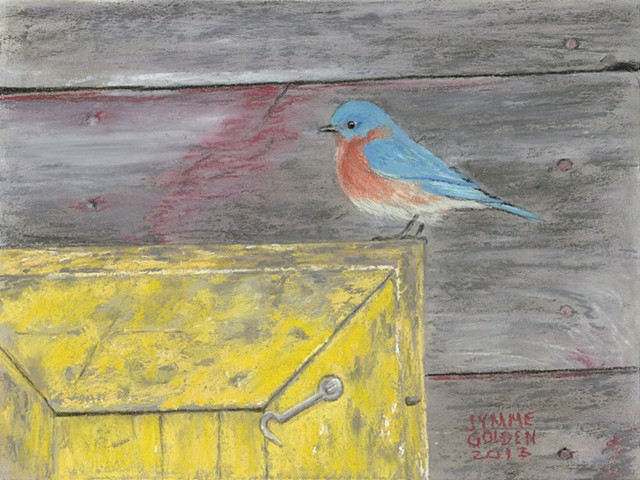 Eastern Bluebird, Weathered Shed and box
