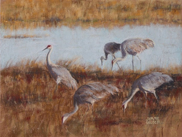 Sand Hill Cranes, Crex Meadows, Birds, Wildlife, Landscape