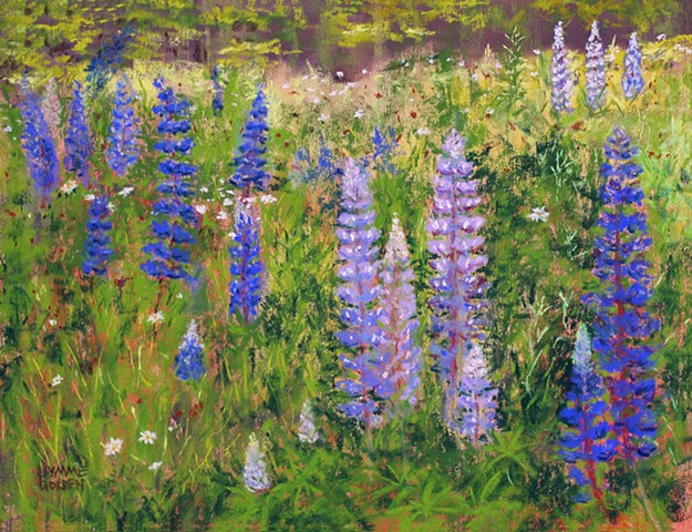 Landscape, Lupines, Flowers, Purple, North Shore