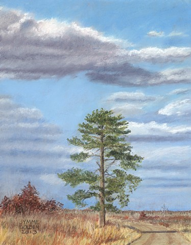 Crex Meadows Wildlife Area, Tree, Pine, White Pine, Path, Autumn, Fall, Wisconsin, Pastel Painting