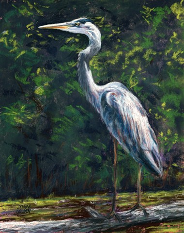 Bird, Wetland, Heron, Great Blue Heron