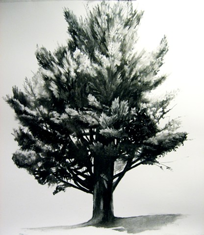 Charcoal drawing - UNFRAMED