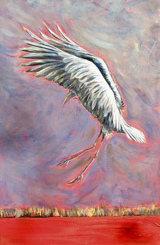 Sandhill crane doing a mating dancing