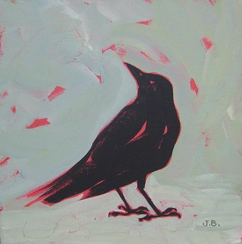 Crow study, corvids