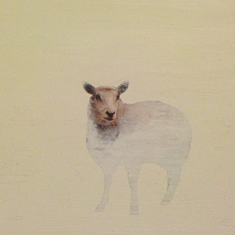 (dis)appearing sheep