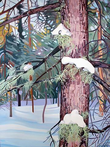 Lichen on Spruce
