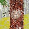 Lichen Woodland