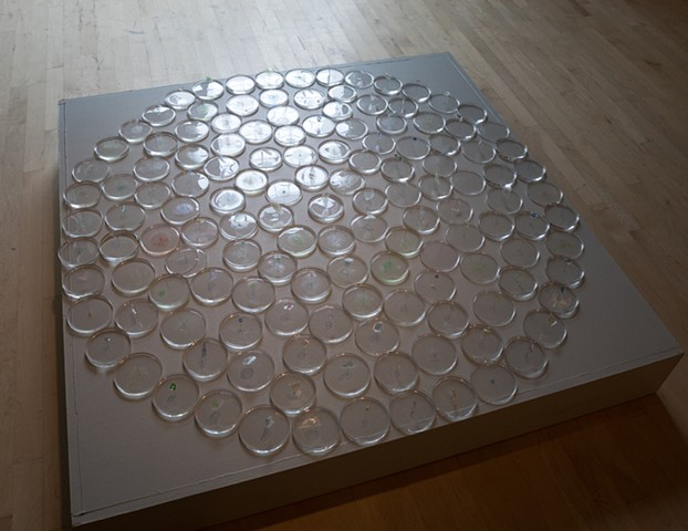 diatoms, diatom art, clean water art, environmental art, environmental installation