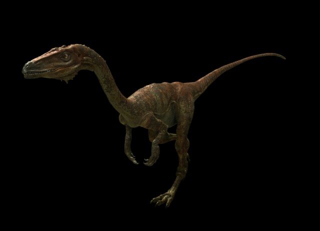 Coelophysis - Dinosaurs Alive!