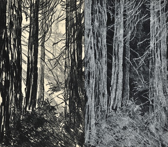 Trace Monotype print of redwood forest trees with Chine Collé on Rives BFK printmaking paper by artist printmaker Debra Jewell