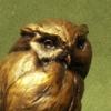"""Owl and Bat"""