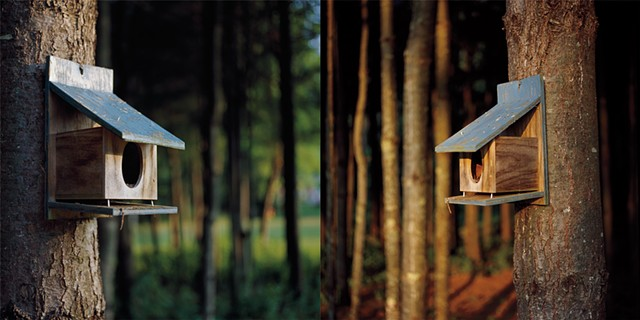 Bird Feeder Diptych