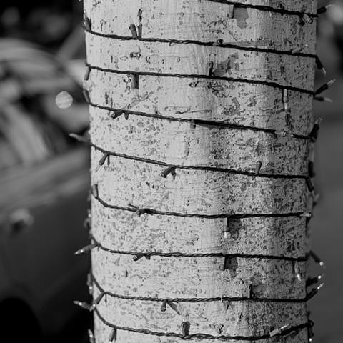 Tree Lights Bondage