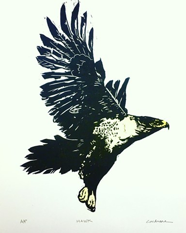 Hawk woodcut with watercolor added
