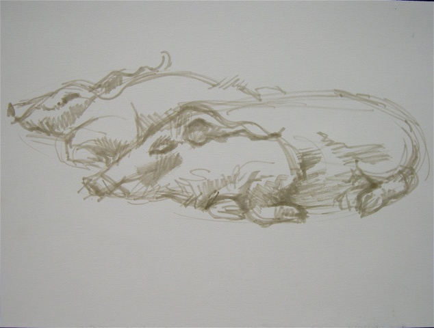 """Zoo Studies, Warthogs"""