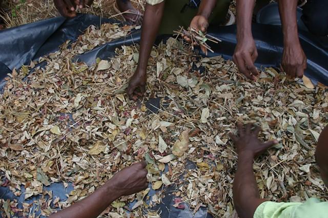 Sustainable Biofuel Option for Kasiagu