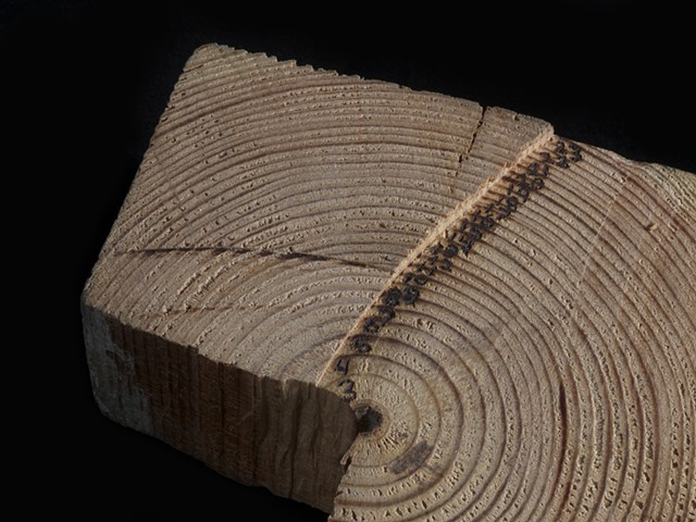 Counting Tree Rings (detail)