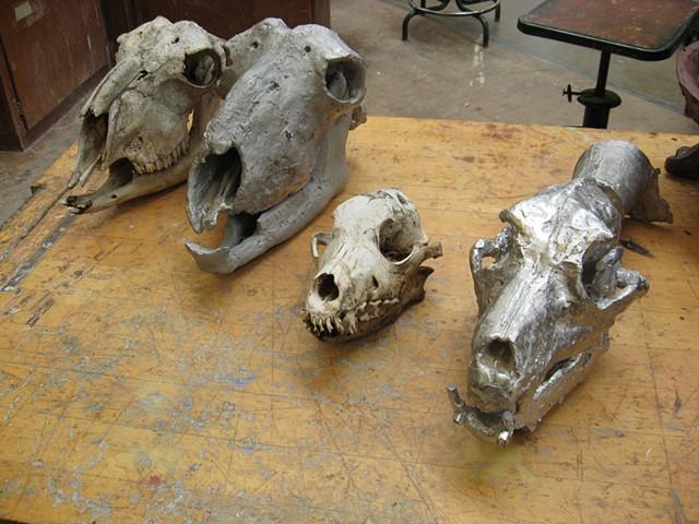 Student Work Replicated Animal Skulls, Sculpture Metal Casting Class,  CSUS Turlock