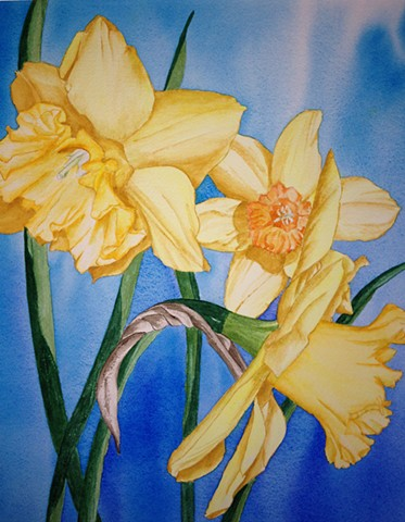 Daffodils against a brilliant blue in watercolor