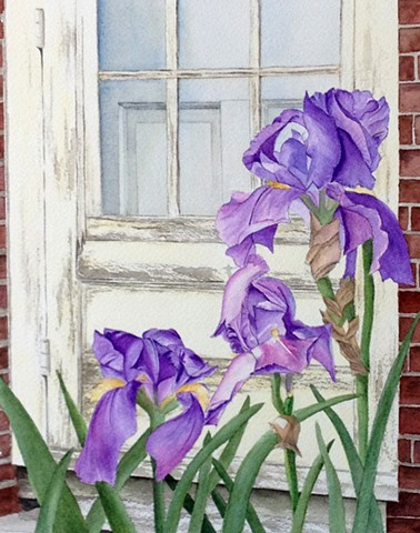 Irises in front of weathered beach door in watercolor