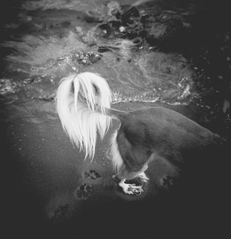 Holga, Dog, Saluki
