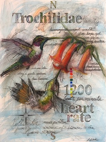 Charcoal Pastel drawings hummingbirds art nature flora and fauna Laura Lebeda