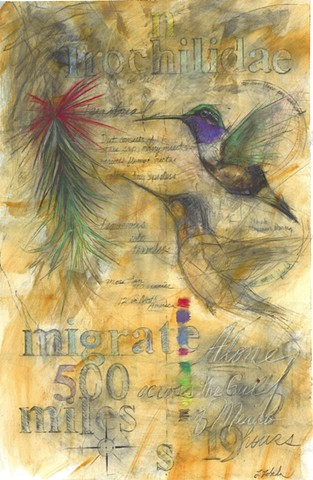 hummingbird hummingbirds migration bird art drawing charcoal rendering laura lebeda
