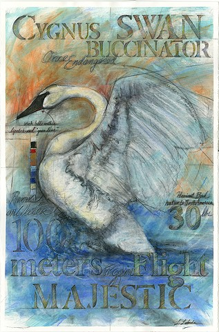 Charcoal Pastel Drawing Trumpeter Swan Bird Drawings Art Nature Flora and Fauna Laura Lebeda