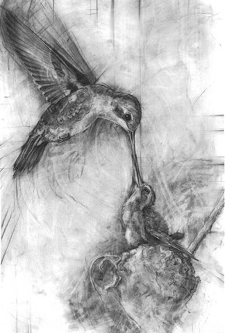 hummingbirds charcoal drawing drawings nature flora and fauna laura lebeda art