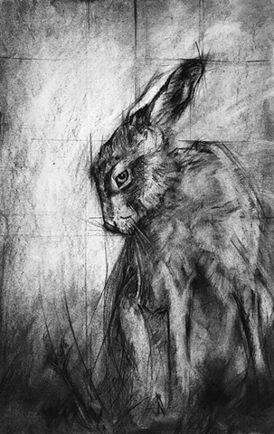 hare rabbit bunny art drawing drawings charcoal rendering sketch Laura Lebeda