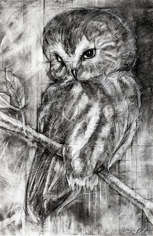 owl art charcoal sawwhet birds drawing charcoal