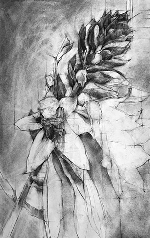 flora and fauna charcoal drawing drawings hosta art bee bees rendering laura lebeda