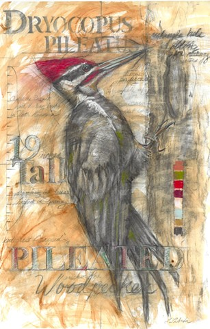 woodpecker pileated flora and fauna drawing drawings charcoal pastel nature art Lebeda Lebeda