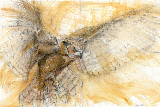 Golden Owl SOLD FIne Art Prints Available