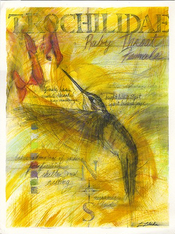 Charcoal Pastel Drawing Ruby Throated Hummingbird Nature Flora and Fauna Drawings Laura Lebeda