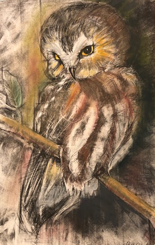 Saw-Whet Owl Hand Colored Print