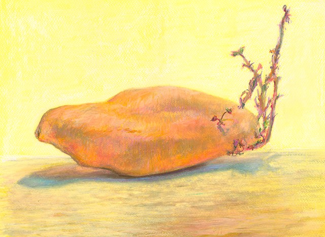 chalk soft pastel sweet potato art tuber yellow drawing