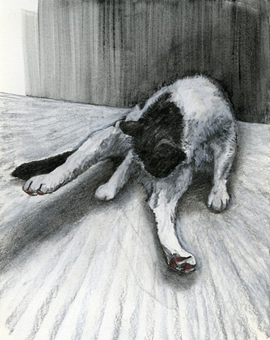 CAT BATH (early study with floor)