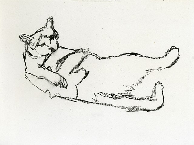study for cat bath III