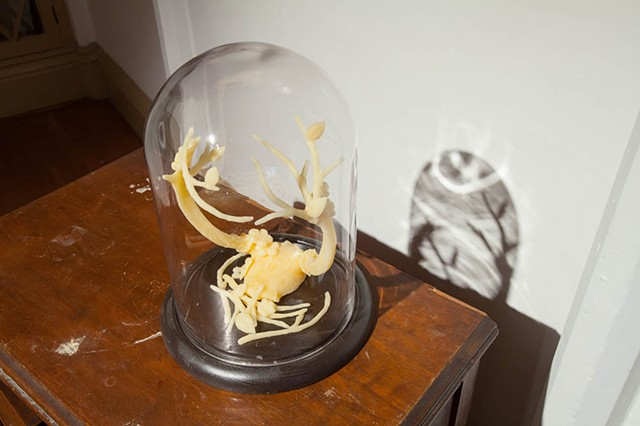 Beeswax, antlers, glass dome