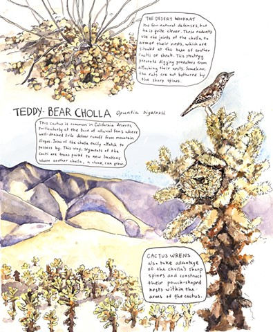 teddy-bear cholla, cactus wren, woodrat