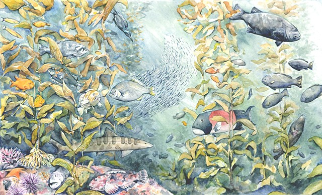Emily Underwood kelp forest illustration