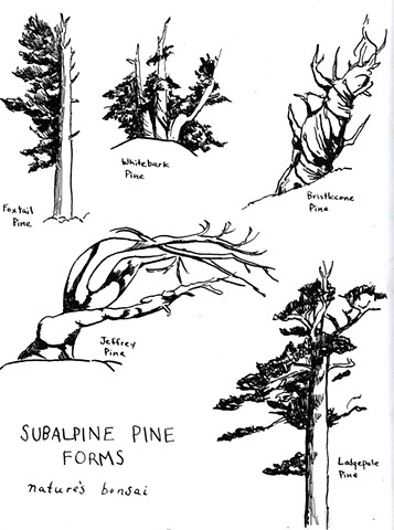 Pine Forms