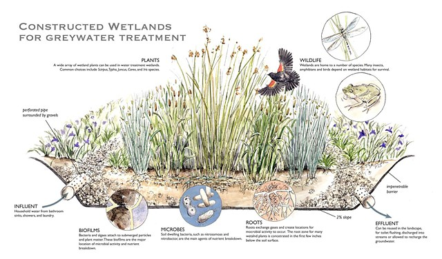 Constructed Wetland Greywater Treatment Emily Underwood